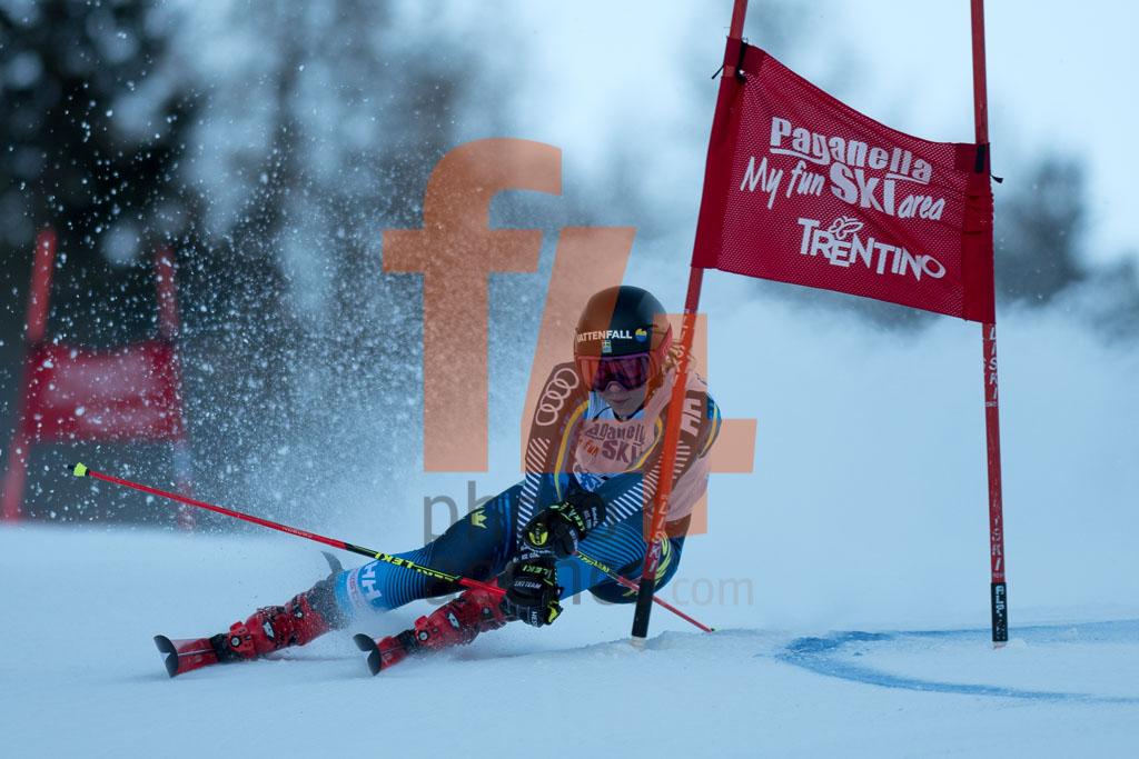 2018/19, Andalo Paganelle (ITA), European Cup, FIS, FJAELLSTROEM Magdalena(SWE), GS, Season, Women